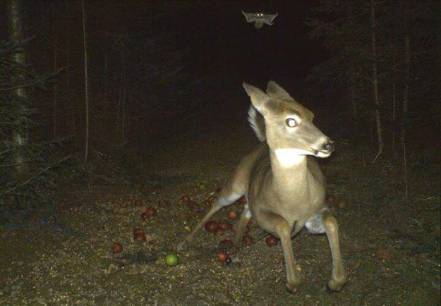 registro-camera-animal-correndo-noite-2342134