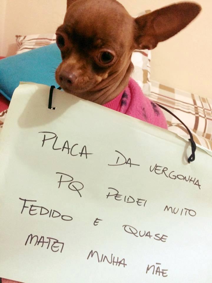 plaquinha-da-vergonha7