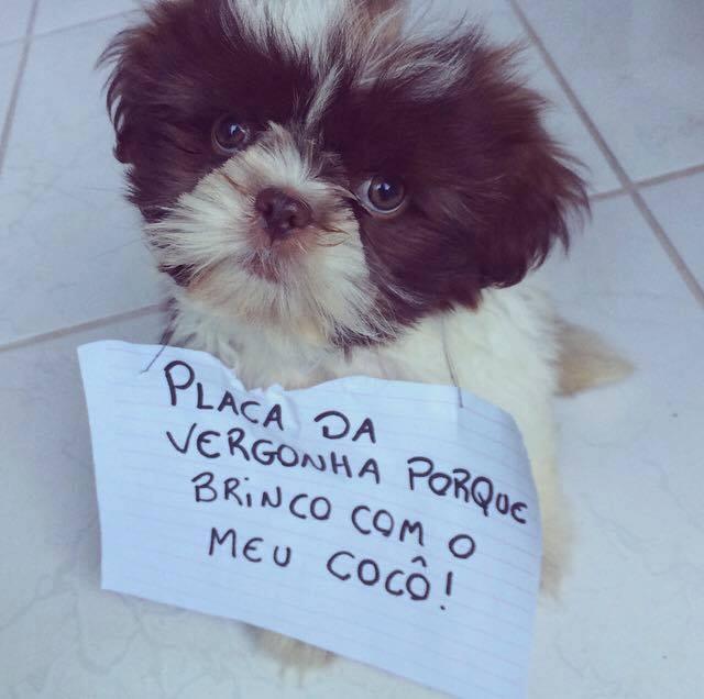 plaquinha-da-vergonha9