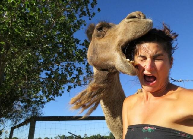 selfies-animais12