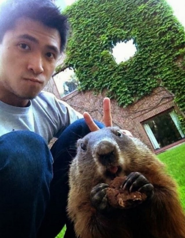 selfies-animais3