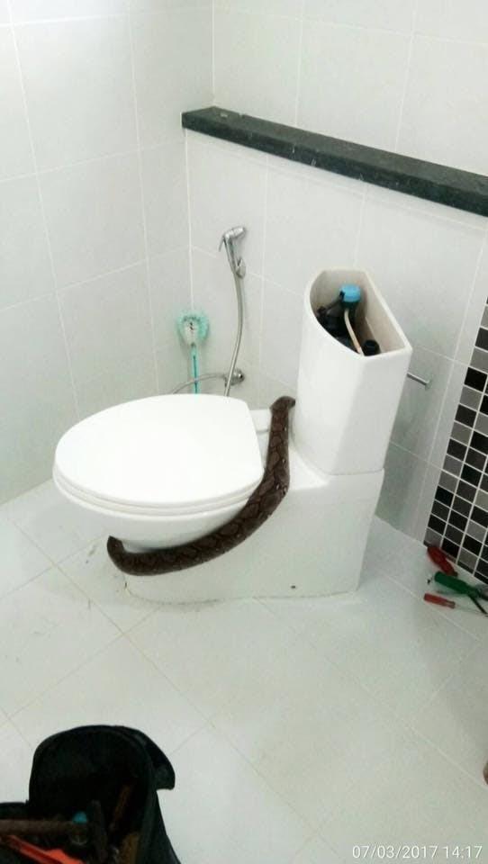 cobra-banheiro