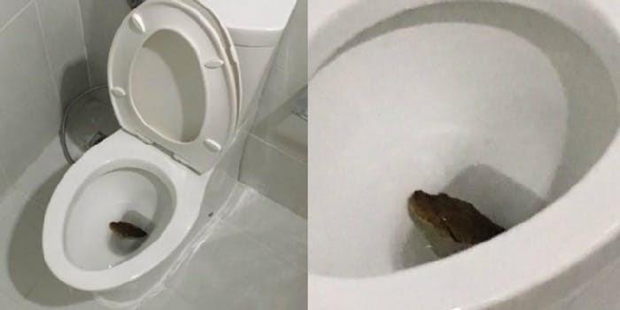 cobra-banheiro2
