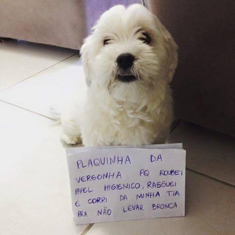 plaquinha-da-vergonha3