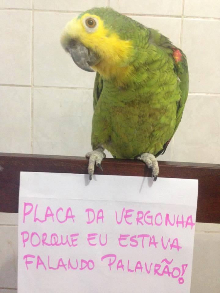 plaquinha-da-vergonha5