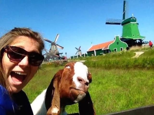 selfies-animais2