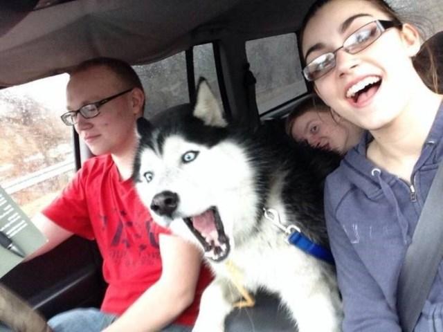 selfies-animais5