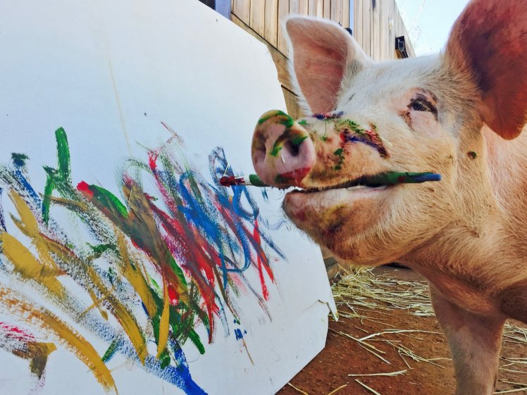 PIC BY JOANNE LEFSON / CATERS NEWS - (PICTURED: Pigcasso the painting pig.) - A pig who was destined to become a pork chop was saved from the slaughter house and has now become an artist. The pig appropriately named Pigcasso is thought to be the worlds only painting pig. She is rarely seen without a paintbrush and spends her most of her time at an easel overlooking the beach in Cape Town. Pigcasso was originally bred to be slaughtered at a pig farm in South Africa but was rescued at just four-weeks old, by her now owner, Joanne Lefson. Upset by the squalid conditions she was kept in, Joanne took pity on the piglet and decided to save her bacon. - SEE CATERS COPY